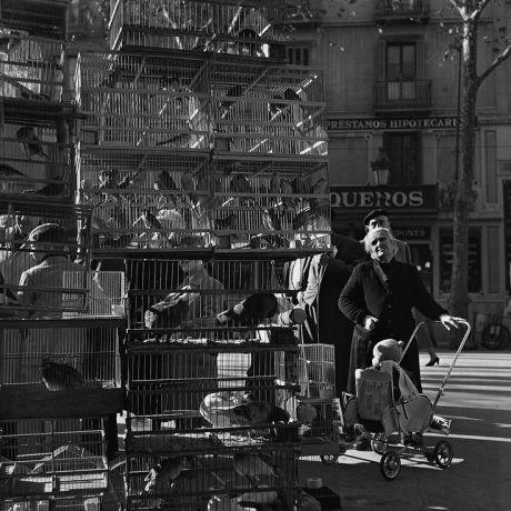 Рамбла птиц. Барселона, ок. 1950